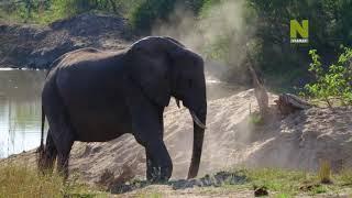 Бескрайняя Африка  4 серия - Заповедник Мала-мала
