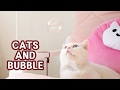 Cats and Bubble