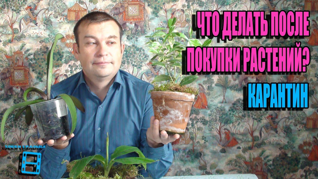У нас вы можете дешево купить цитрусовые деревья в ассортименте с доставкой по москве круглосуточно. +7(499)394-15-47.