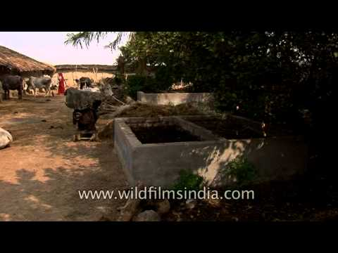 Vermicompost: Recycling cattle faeces into valuable organic manure in rural Uttar Pradesh