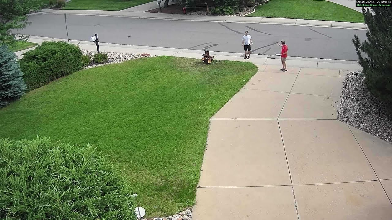 August 11th, 2019: Tree Stump gets a violation letter from HOA