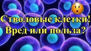 Стволовые клетки! Вред или Польза?