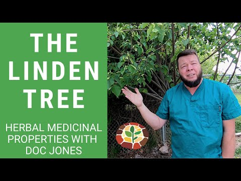 The Medicinal Benefits of the Linden Tree! Quick Recap with Doc
