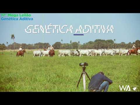 Confira o Making-of do 17º Mega Leilão Genética Aditiva 2020