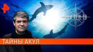 Тайны акул. НИИ РЕН ТВ (07.11.2019).