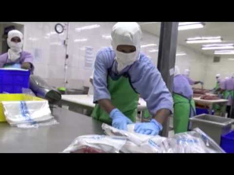 Marshall Islands fresh tuna processing, MIFV, Majuro