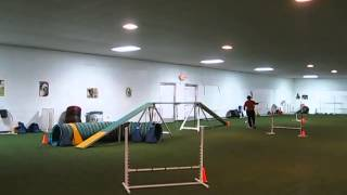 Puppy Dogs Funny Feets Training Center At As Angels America