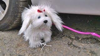Crushing Crunchy & Soft Things by Car EXPERIMENTS - DOG VS CAR