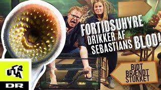 Fortidsuhyre drikker af Sebastians blod! - Havlampret | Bidt, brændt og stukket