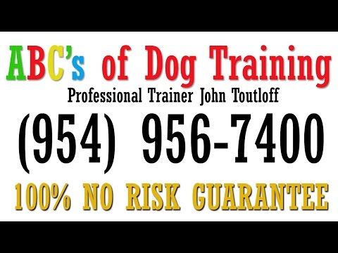 Dog Trainer in Fort Lauderdale | Dog Obedience Training