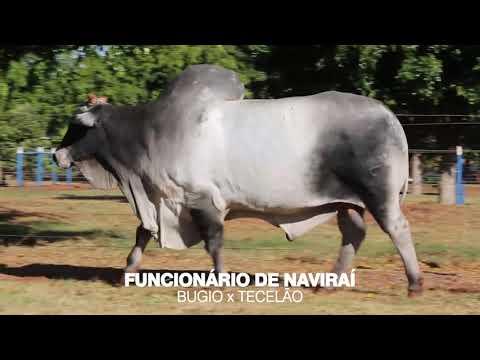 LOTE 100 e 101 - FUNCIONÁRIO DE NAVIRAÍ