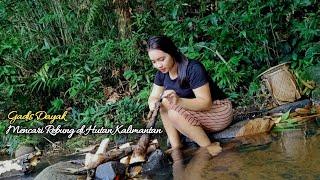 🔴Gadis Dayak Mencari Rebung Di Hutan   Kehidupan Suku Dayak Pedalaman Kalimantan Barat