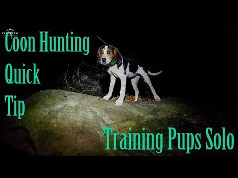 Coon Hunting Quick Tip/ Training Pups Solo