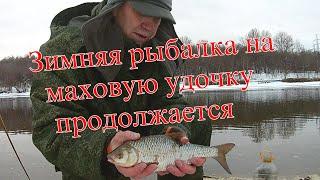 Зимняя рыбалка на маховую удочку продолжается
