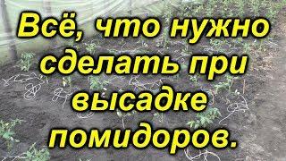 """Высадка помидоров в теплицу. Мастер-класс от канала """"Сад, огород, своими руками!"""""""