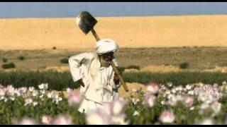 Opium Cultivation Reaches Record Levels In Afghanistan!! A Reason For War