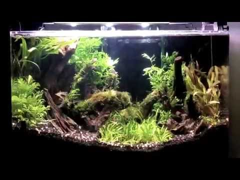 Awesome How To Aquascape A Planted Aquarium With Low Light Plants And Diy Co2
