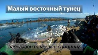 Восточно-Китайское море 东海. Малый восточный тунец (巴鰹). Береговая рыбалка с тяжёлой снастью. 2016/10