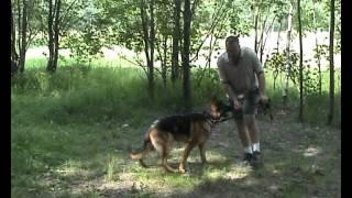 Дрессировка собак ОКД собак Четвёртое базовое упражнение