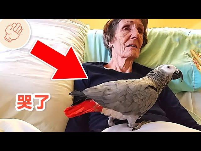 病婦向她的鸚鵡說再見,鸚鵡的回應讓世界都哭了