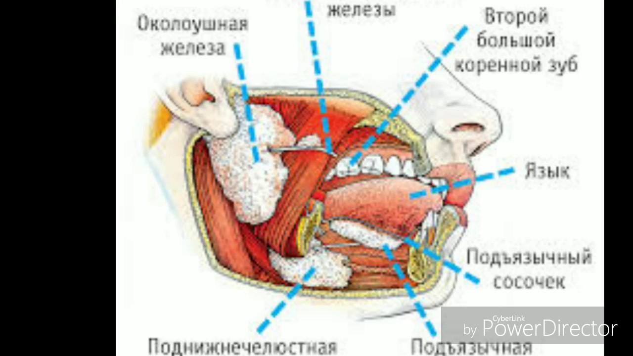 Нос греческий и римский у женщин: фото в профиль, о чем