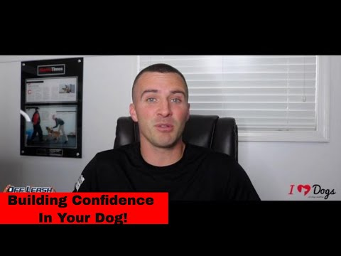 Confidence Training For Dogs -  4 Key Elements Of Confidence Building In Your Dog