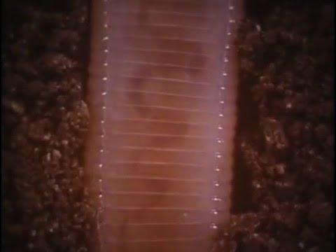 Потаенный мир почвы (Дождевые черви)