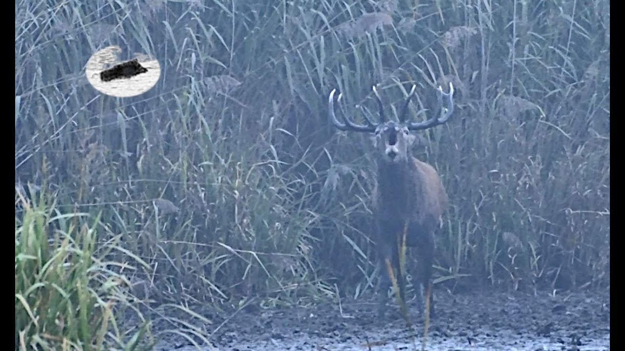 Hirschjagd in der Brunft 2020 #2-wie soll mann schreien.Red stag hunting in the rut-how to call stag