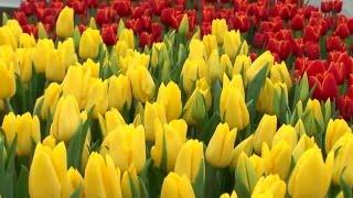 видео Выращивание цветов на продажу