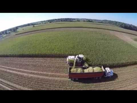 Chopping Corn Silage near Bethel Indiana - August 2016