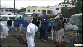 MBCテレビ「ズバッと!鹿児島」内のコーナー かごしま南北600キロ...