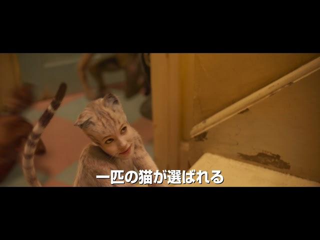 映画『キャッツ』日本限定予告編