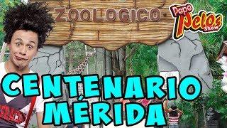 Pepe Pelos Zoologico El Centenario Merida Yucatan