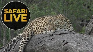 safariLIVE - Sunset Safari - June, 13. 2018