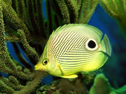You see animal 10 the fantastic colorful light fish or for What do fish see