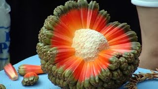 Top 10 Tropical Fruits You