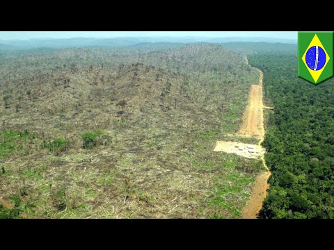 Amazon reforestation: 73 million trees to be planted in tropical reforestation - TomoNews