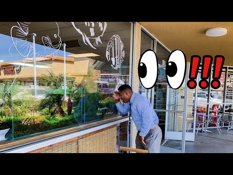 This FISH STORE Is So AMAZING, I Had To VISIT AGAIN!!!