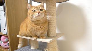 トイレの砂と本気で戦って満足げな顔をする猫