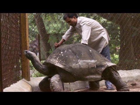Dünyanın En Uzun Yaşayan Canlıları