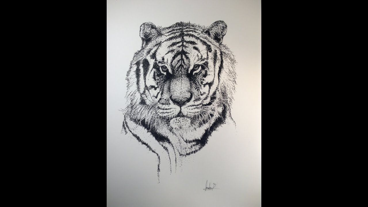 Realistic Tiger Pointillism Drawing Drawing Time Lapse 3 Youtube