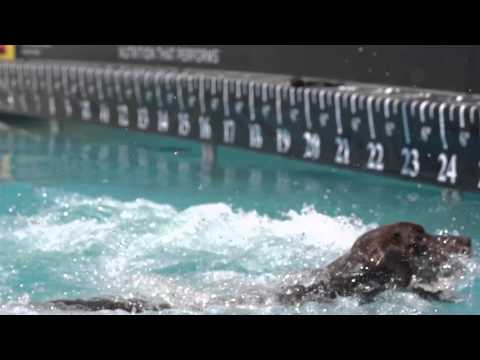 Diving Dog 3rd Place - Incredible Dog Challenge 2015 Boston, MA