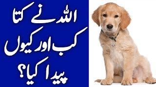 Allah Tala Ne Kuttay Dog Ko Kab Aur Kyun Paida Kya? SpeakOut