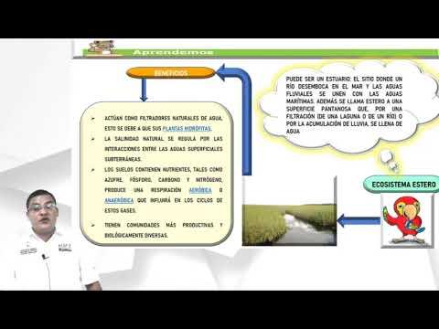 Ecosistemas Naturales de Honduras clase 6 – Quinto Grado – Ciencias Naturales