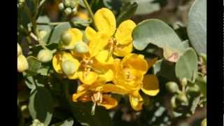 Lovely Australian Flowers