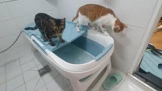 [시루콩 VLOG] 고양이도 욕조가 좋아요