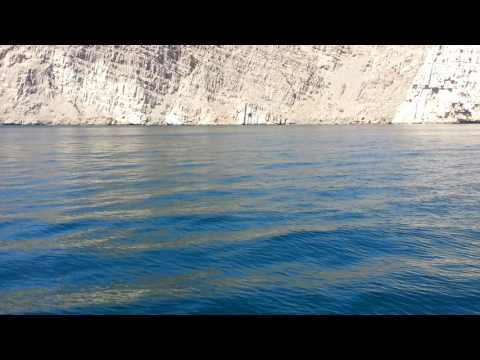 Musandam, Oman & UAE : Glimpse of a Dolphin while Dhow Cruising on the deep blue sea..