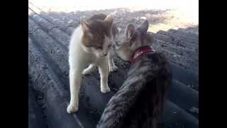 Bagarre de chat !!!