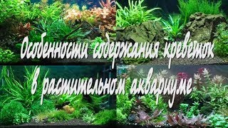 Особенности содержания креветок в растительном аквариуме