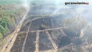 Skutki pożaru lasu w Gliniku pod Gorzowem